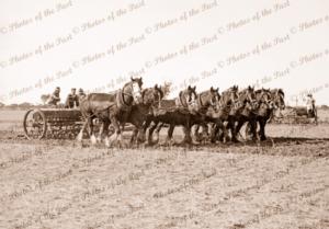 8 horse team pulling plough/seeder, c1940s