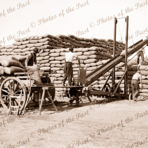 Stacking wheat at Sheep Hills, Victoria, c1950