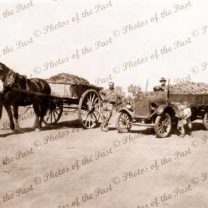 Alwin Schutz with truck load of grapes at Lyrup, SA. South Australia. 1920s