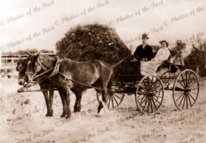 Mr & Mrs AE Carrig. Founders of Carrig Chemists at Port Augusta, South Australia. C1910. Horse and carriage