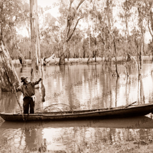 Fishing for Murray Cod on Edwards River, Victoria, c1934. Drum net in punt