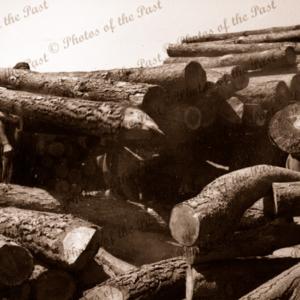 Unloading logs at Dick Garrett's Sawmill Second Valley, South Australia, 1954