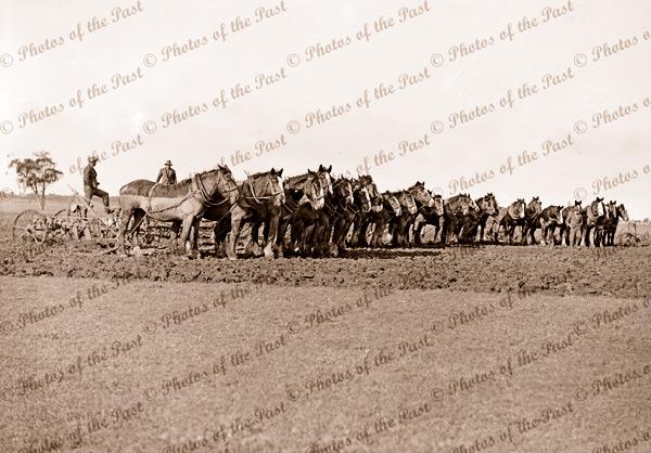 Horse plough teams in paddock. Victoria, c1940s