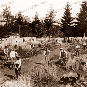 Prince Alfred College students tending gardens. SA. c1893