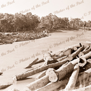 Logs in river at Moama Timber Mill, NSW. PS ADELAIDE at river bank. c1910s. paddle steamer. New South Wales.