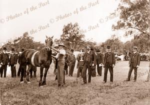 Presenting the Champion Cup at Piles Paddock, now Kensington Gardens, SA. 1920s? South Australia. Horse Racing