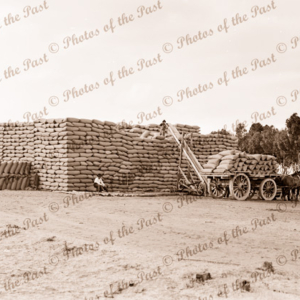Stacking wheat at Minyip, Vic. c1950s. Victoria