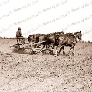 Five horse team harrowing fields. c1950s