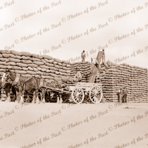 Stacking bags of wheat at Minyip, Victoria. c1950s