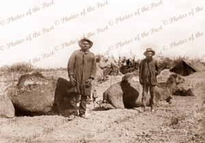 2 Aborigines, Alex Rowdy (L) & Peter (R) from Anna Creek at Cooper Pedy water hole attending to camels. SA. South Australia.
