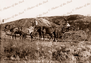 'Four in hand' buggy at White Cliffs, NSW. New South Wales. Horse and buggy. 1897
